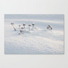 Winter Fairies Canvas Print