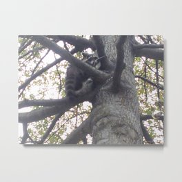 Raccoon in a Tree Metal Print