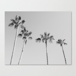 Black Palms // Monotone Gray Beach Photography Vintage Palm Tree Surfer Vibes Home Decor Canvas Print