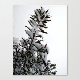 First Snowfall Canvas Print