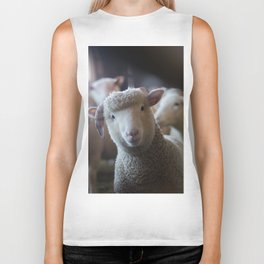 Sheep Looking at Camera Biker Tank