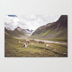 Tyrolean Haflinger horses I Canvas Print