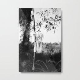 Fine Art Prints  Metal Print