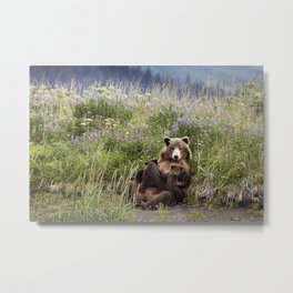 Momma Bear Nursing in the Lupines Metal Print