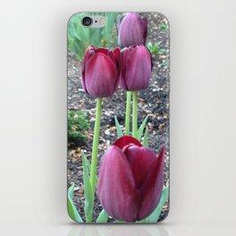 Queen of Night Tulips iPhone Skin