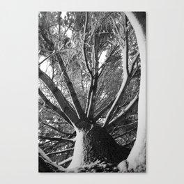 Natural Framework Canvas Print