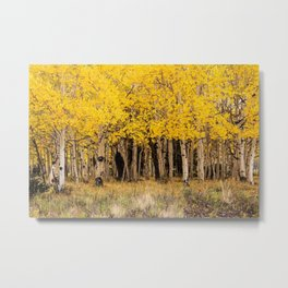 Painted Aspens, San Juan, Colorado Metal Print