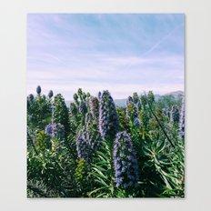 Purples Canvas Print