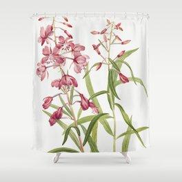 Fireweed (Epilobium angustifolium) (1902) by Mary Vaux Walcott Shower Curtain