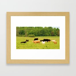 family of cows  Framed Art Print