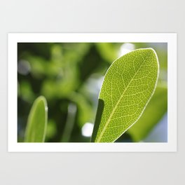 leave-leaf Art Print