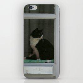 A  Cat in the Window iPhone Skin