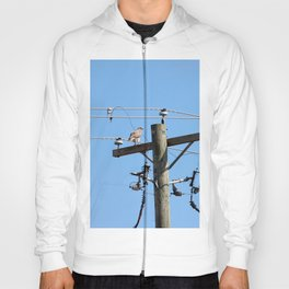 Red Tailed Hawk on Telephone Pole 3 Hoody
