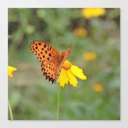 Ms. Indian Fritillary at West Lake Canvas Print