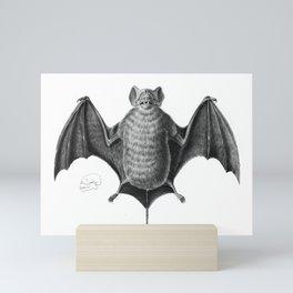 Bat Scientific Illustration Mini Art Print