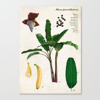 musa Canvas Prints featuring Musa Paradisiaca by plantage