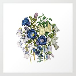 Bellflowers Art Print