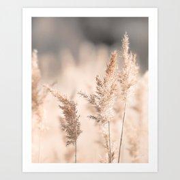 Neutral Tone Pampas Grass, Reed Art Print