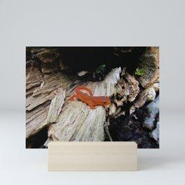 Red Newt Mini Art Print