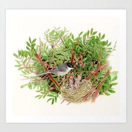 Sardinian Warbler - nesting bird on the Ligurian coast Art Print