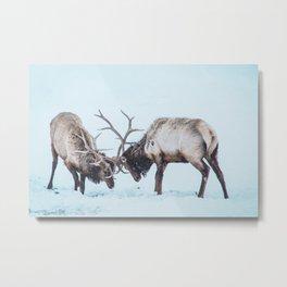 Snowy Elk in Jackson Wyoming Metal Print