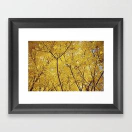Colorado Autumn in Yellow Framed Art Print