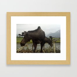 2 Headed Moose? Framed Art Print