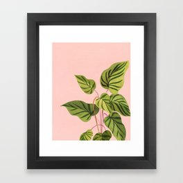 Upstart / Tropical Plant Framed Art Print