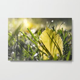 Yellow leaf in grass in autumn with morning dew bokeh Metal Print