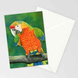 Pretty Parrot Stationery Cards