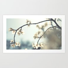 spring break in bloom . . . Art Print