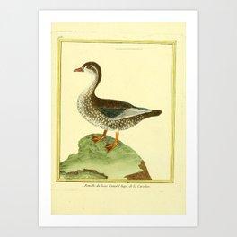 065 beau canard hupe (Fr) Art Print
