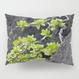 Wild Hawaiian Green Succulents Growing From Lava Rock Pillow Sham
