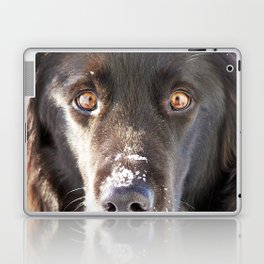 Dog Close-up Laptop & iPad Skin