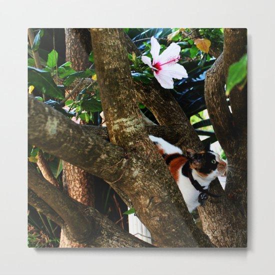 Hibiscus flower cat Metal Print