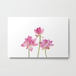 Lotos Waterlilies Flowes pink Metal Print