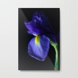 Moody Iris Metal Print