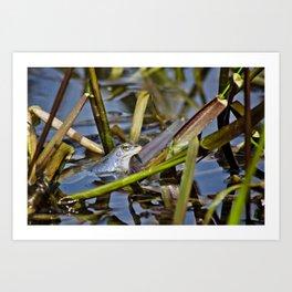 Blue Frogs 02 - Rana arvalis Art Print