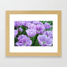 Mauve tulips Framed Art Print