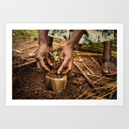 coffee plant Art Print