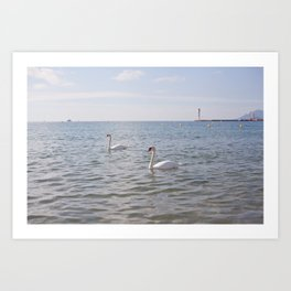 Riviera Swans Art Print