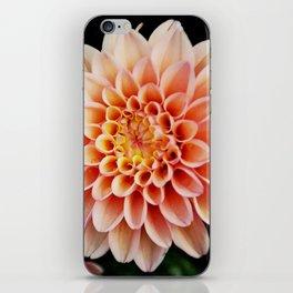Light Orange Dahlia iPhone Skin