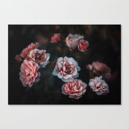 Moody Roses I Canvas Print