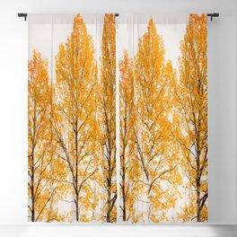 Aspen Trees #decor #buyart #society6 Blackout Curtain