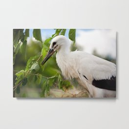 Orphaned one White Stork Metal Print