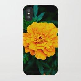 Tangerine Beauty iPhone Case