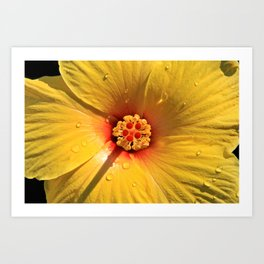 Buttery Yellow Hibiscus Art Print