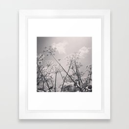 Cow Parsley Framed Art Print