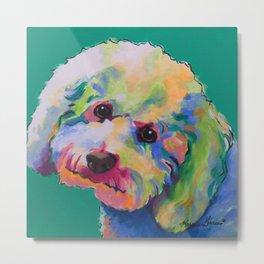 Bichon Poodle Pet Portrait Metal Print