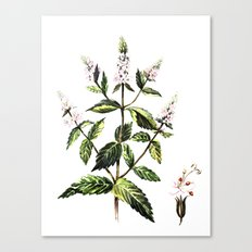 watercolor peppermint Canvas Print